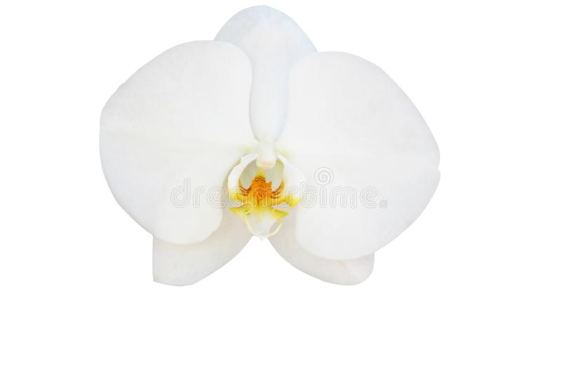 Mooie witte orchidee die op witte achtergrond wordt geïsoleerdo stock fotografie