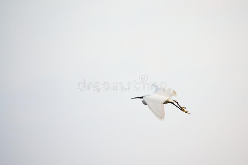 Download Mooie Witte Vogel Die Op Saaie Hemelachtergrond Vliegen Stock Afbeelding - Afbeelding bestaande uit vlieg, mooi: 107701307