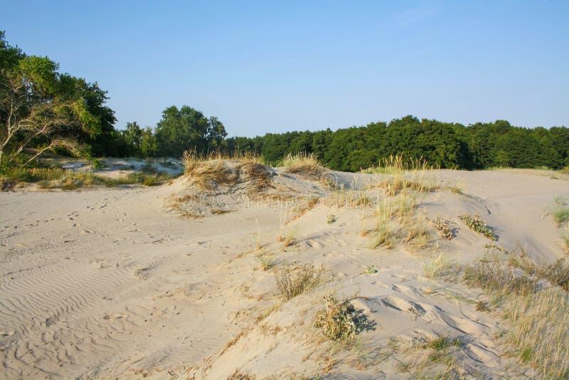 Mooie witte zandduin en boom over Oostzee in de zomer, landschap stock foto