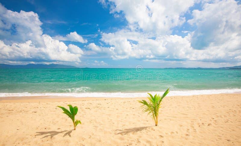 Mooie zandstrand en tropische zee met twee kleine palmbomen royalty-vrije stock afbeelding