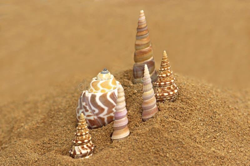 Mooie zeeschelpen die in het zand van het strand worden geschikt stock afbeeldingen