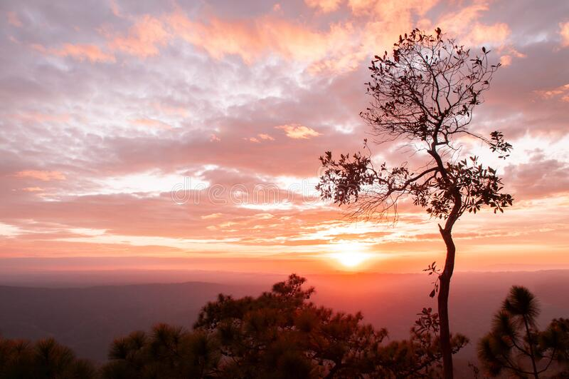 Mooie zonnehemel met wolken en bomen bij Pha Lom Sak, Phu Kradueng Loei - Thailand royalty-vrije stock afbeelding