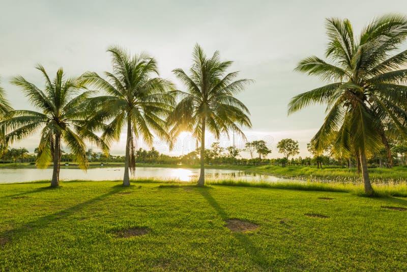 Mooie zonneschijn met groen parklandschap en groen gras royalty-vrije stock foto