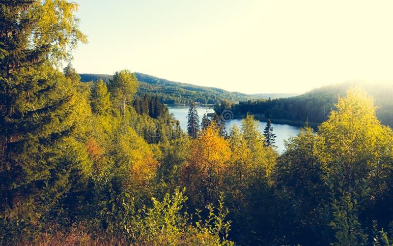 Mooie zonnige avond in bosberg landscap stock afbeeldingen