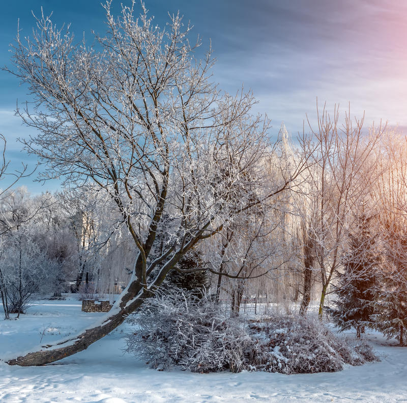 Mooie zonnige ochtend in stadspark stock fotografie