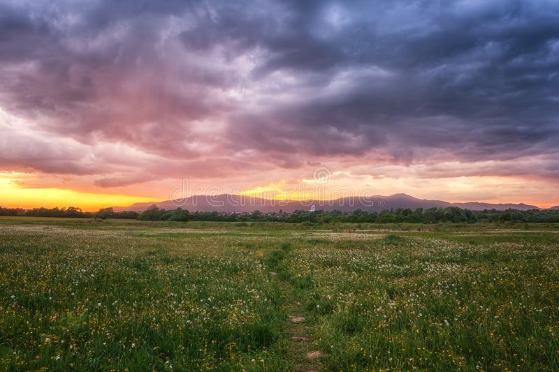 Mooie zonsondergang in de bloeiende vallei, het toneellandschap met wilde het groeien bloemen en kleuren de bewolkte hemel stock afbeeldingen