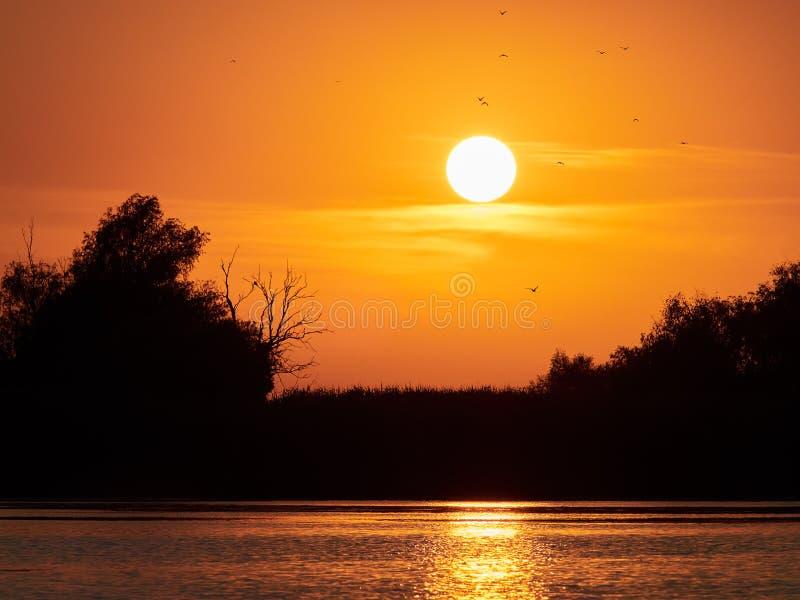 Mooie zonsondergang in de Delta van Donau, Roemenië stock foto