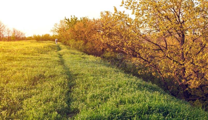 Mooie Zonsondergang De lentelandschap met de mens op het gebied stock foto's