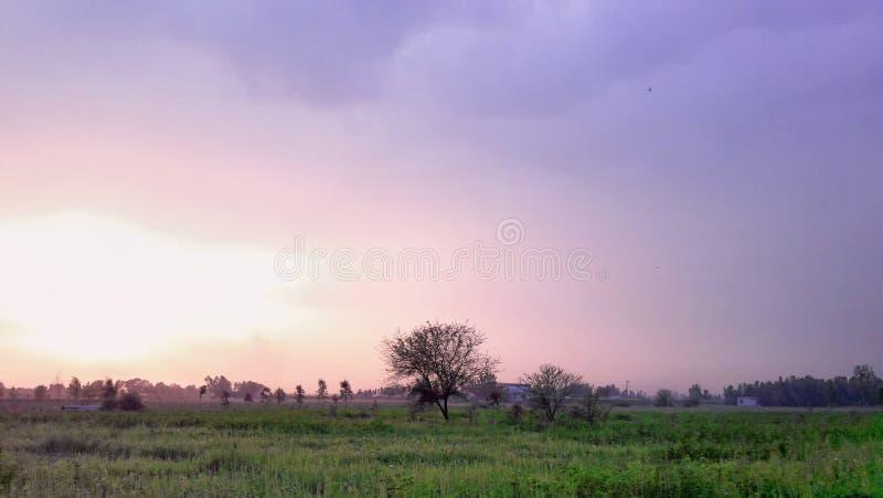 Mooie Zonsondergang met Groen Gazon en Purpere Hemel stock afbeelding