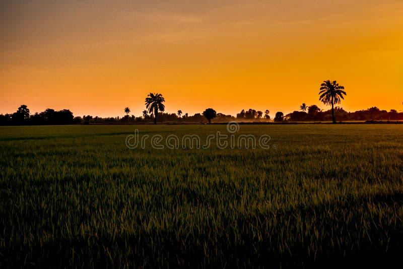 Mooie zonsondergang oranje hemel over de puddy achtergrond van de padieveldaard in Azië stock fotografie