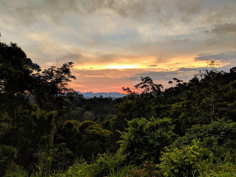 Mooie zonsondergang over donkere wildernis stock afbeelding