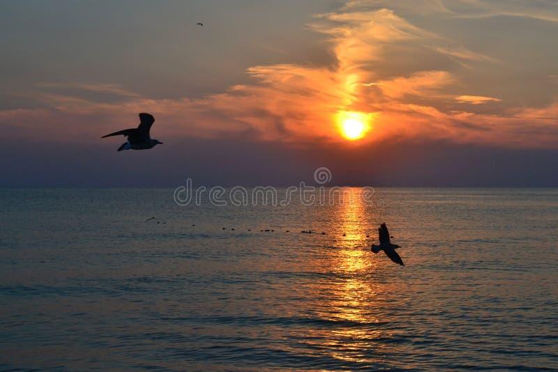 Mooie zonsondergang over het overzees. royalty-vrije stock foto's