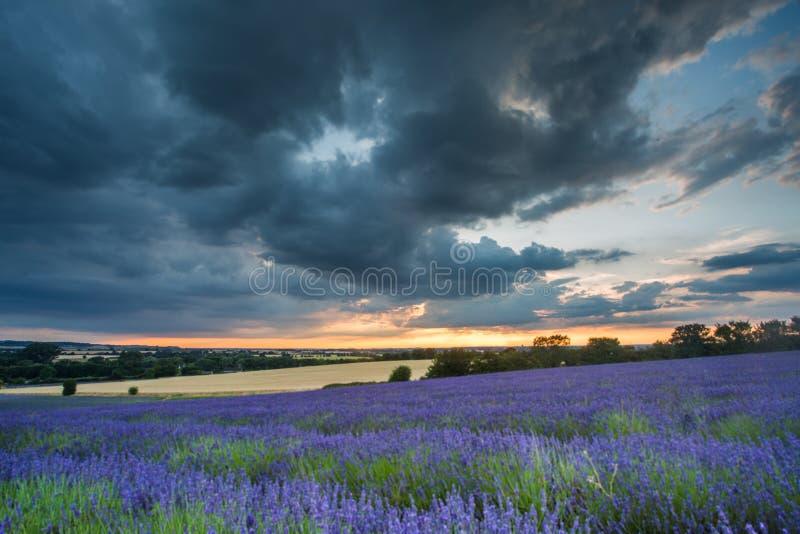 Mooie zonsondergang over lavendelgebied bij de zomeravond royalty-vrije stock fotografie