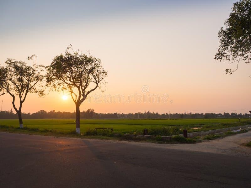 Mooie zonsondergang over padievelden, met een boom naast een weg in hoian stad in Vietnam royalty-vrije stock foto's