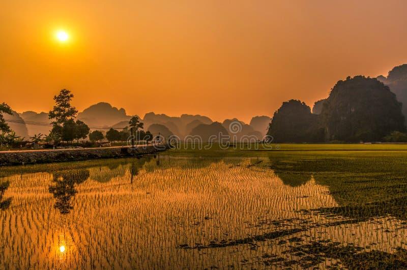 Mooie zonsondergang over padievelden in Vietnam stock afbeeldingen