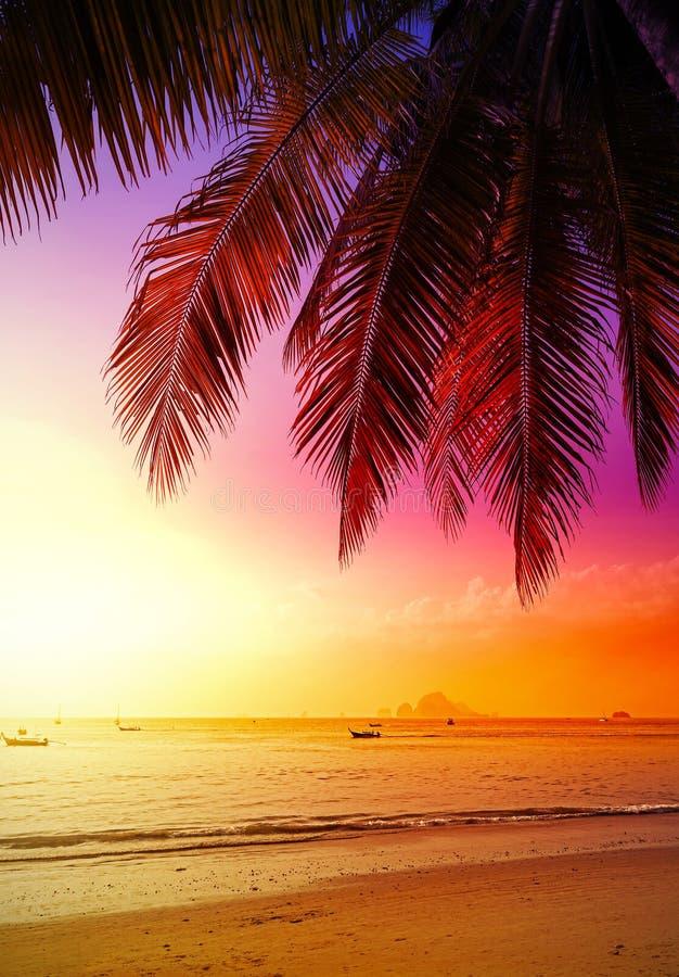 Mooie zonsondergang over strand stock foto's
