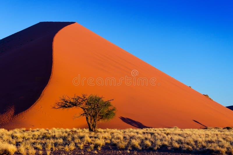 Mooie zonsondergangduinen en aard van Namib woestijn, Afrika royalty-vrije stock foto