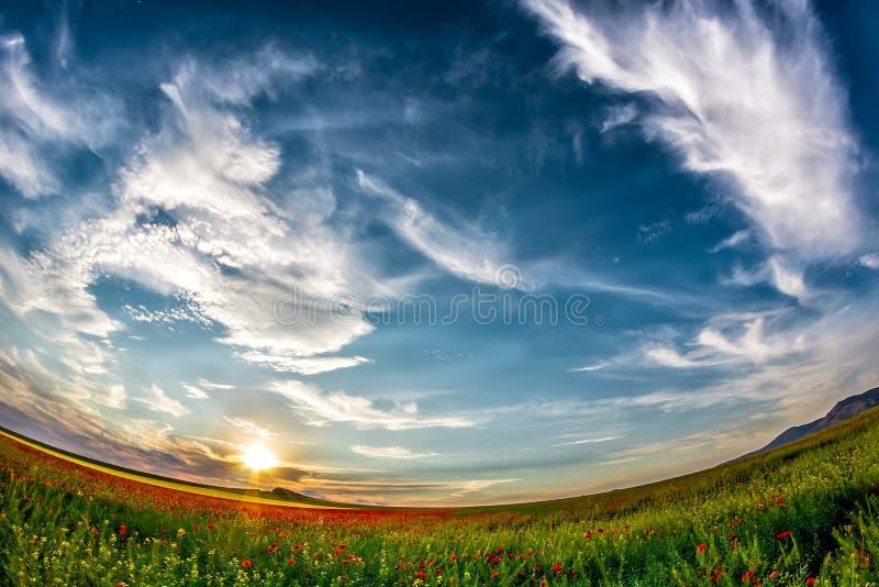 Mooie zonsonderganghemel met witte wolken over een groen de zomergebied met papavers stock fotografie