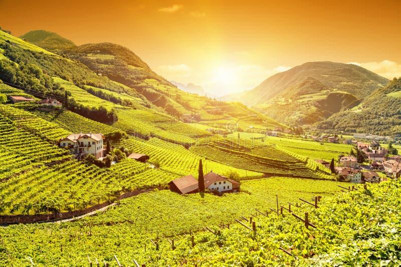 Mooie zonsondergangmening over een wijngaard in Italië royalty-vrije stock afbeeldingen