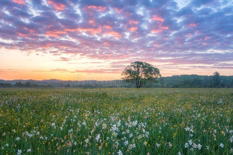 Mooie zonsopgang in de bloeiende vallei, het toneellandschap met wilde het groeien bloemen en kleuren de bewolkte hemel stock foto