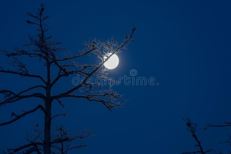 Mooie zonsopgang in de winter royalty-vrije stock foto's
