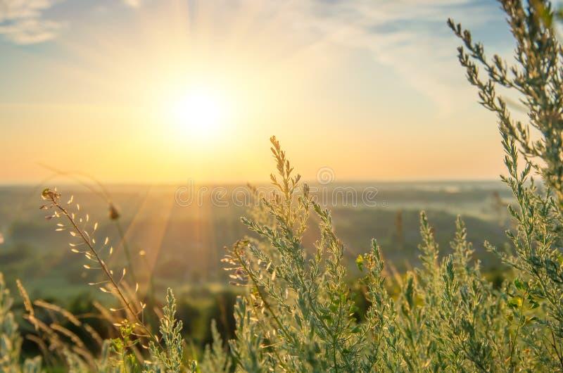 Mooie zonsopgang in de zomer royalty-vrije stock afbeelding