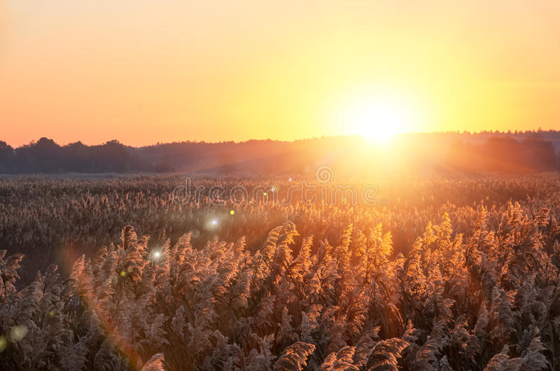 Mooie zonsopgang in de zomer stock foto