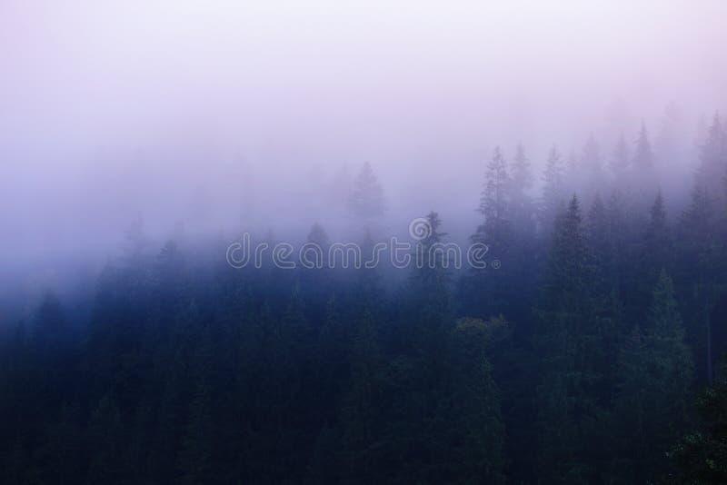Mooie zonsopgang met mist over het bos, hoog in de bergen Idee voor openluchtactiviteiten, reis royalty-vrije stock afbeeldingen