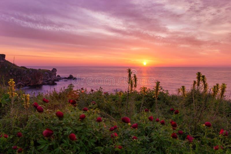 Mooie zonsopgang met Wilde pioenen bij Yailata-reserve, dichtbij Kamen Shore, Bulgarije royalty-vrije stock fotografie