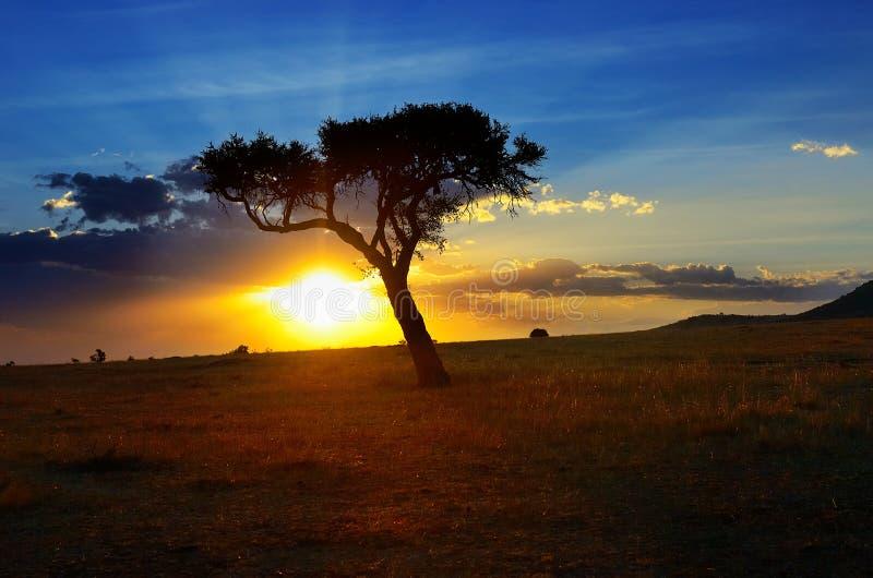 Mooie zonsopgang of zonsondergang in Afrikaanse savanne met acaciaboom, Masai Mara, Kenia, Afrika stock fotografie