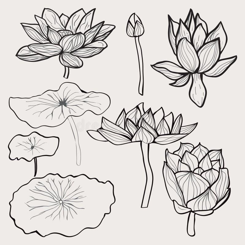 Mooie zwart-wit hand getrokken lotusbloembloemen en bladeren vector illustratie