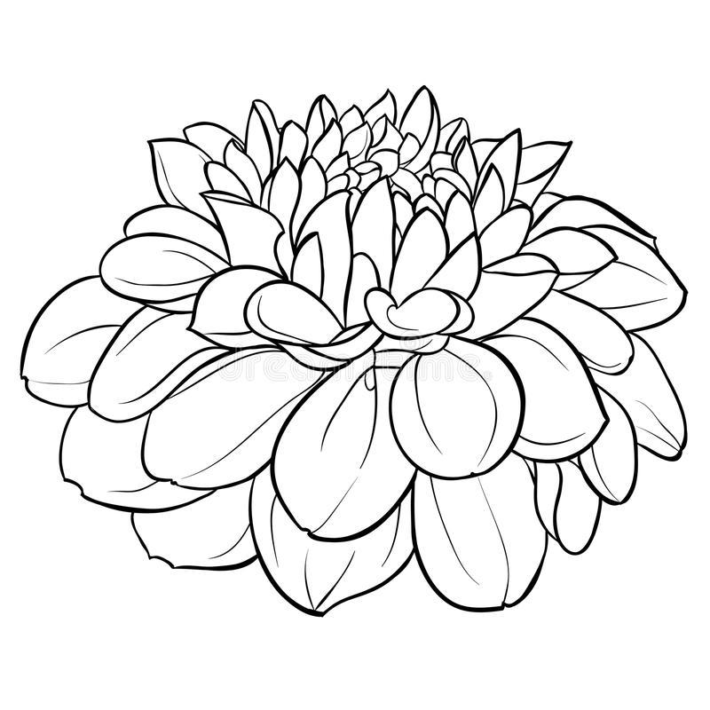 Mooie zwart-wit zwart-witte die dahliabloem op achtergrond wordt geïsoleerd Hand-drawn contourlijnen stock illustratie