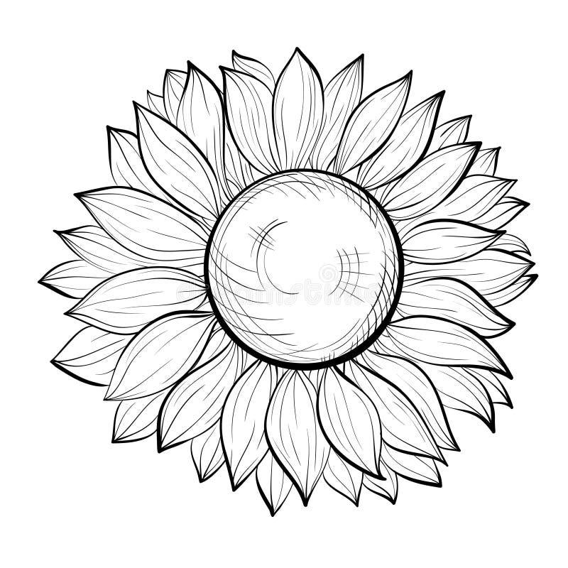 Mooie zwart-witte zonnebloem die op witte achtergrond wordt geïsoleerd vector illustratie