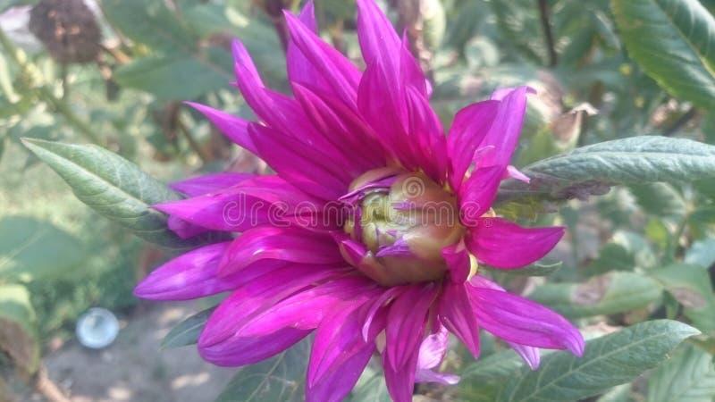 Mooiste bloem voor behangbeeld royalty-vrije stock afbeeldingen