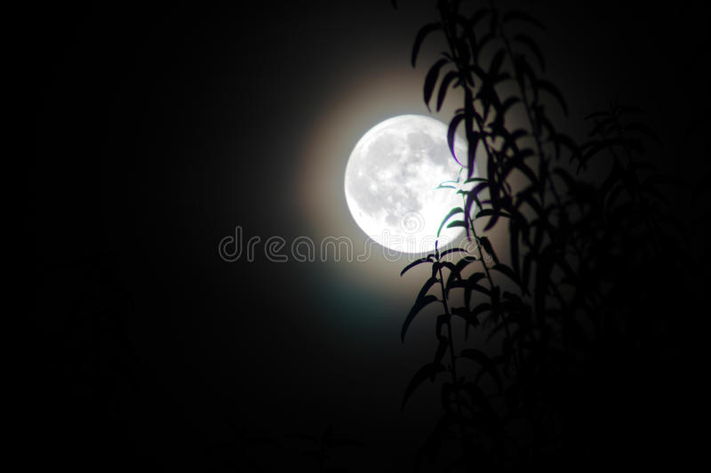 The moon. Behind the bush royalty free stock images