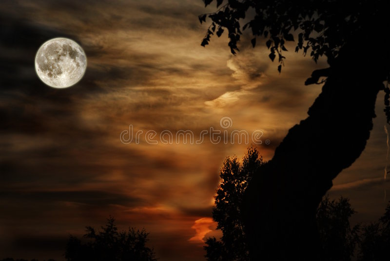 Moon. Full moon on a background cloudy sky with tree on edges stock photography