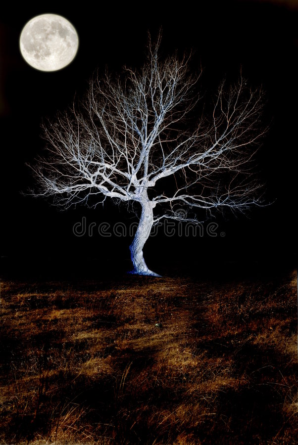 Moon. Full moon on a background a dry tree stock photo