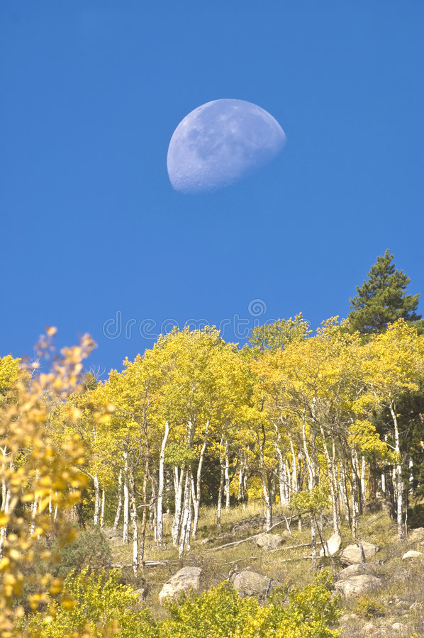 Free Moon And Aspens Stock Image - 3865921