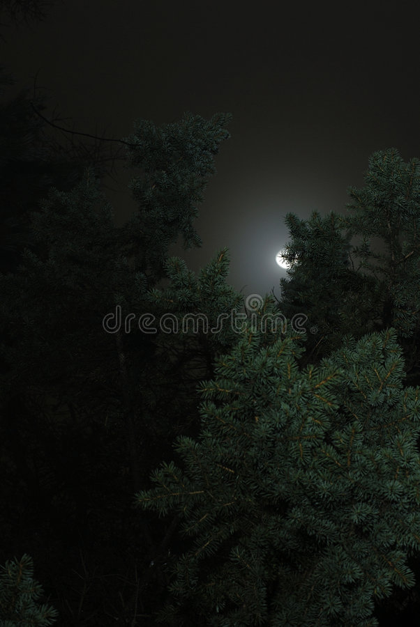 Free Moon And Trees Stock Image - 2443471