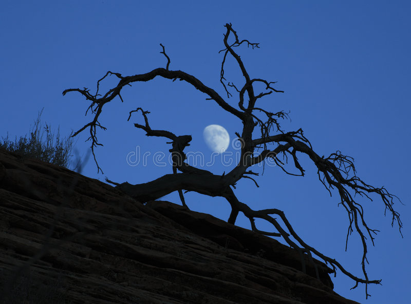 Moon behind dead tree at dusk stock image