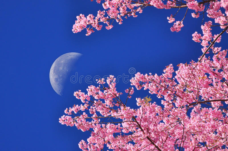 Download The Moon On Blue Sky With Flower Foreground Stock Image - Image of thailand, moon: 25113711