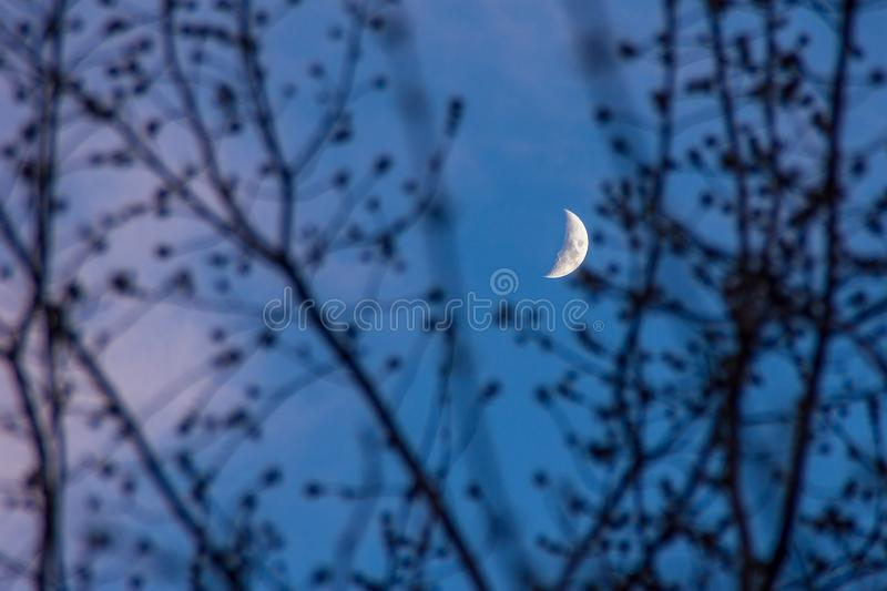 Moon through the branches of trees without leaves royalty free stock photo