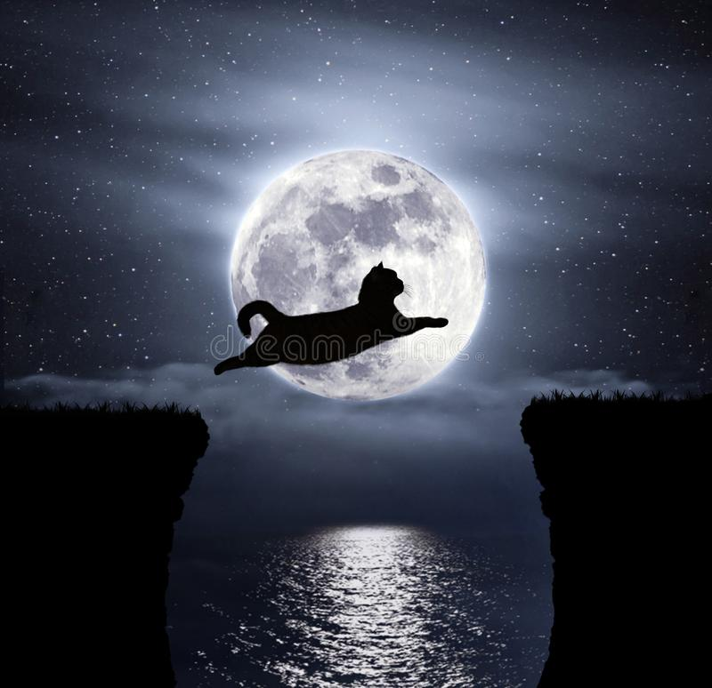 Moon and cat 2 royalty free stock photography