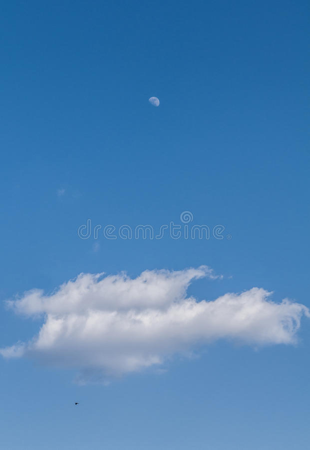 The moon, the cloud and the bird royalty free stock photo