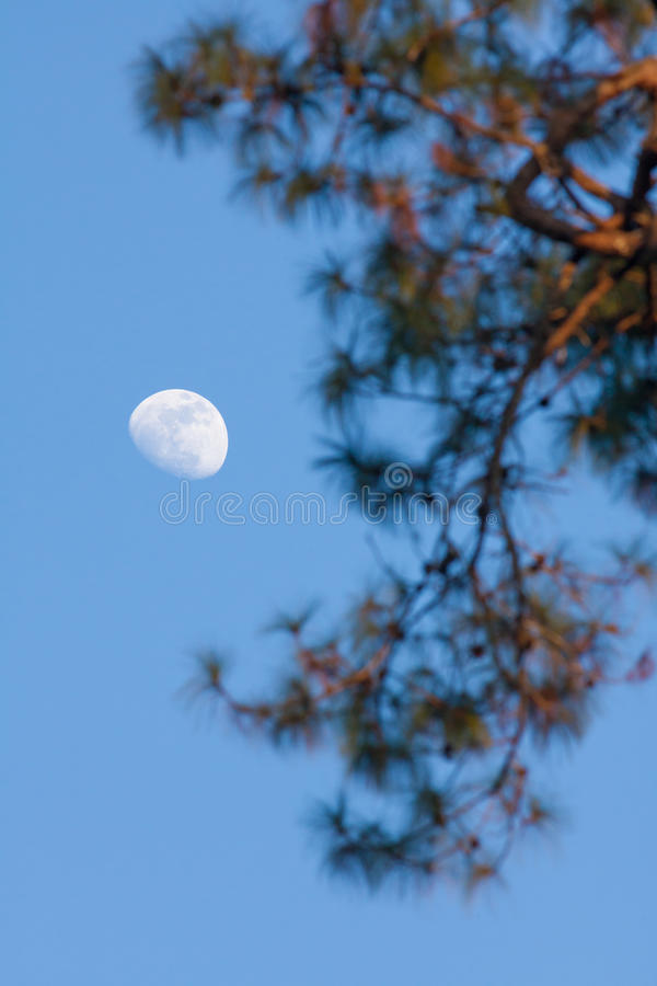 Moon. Half moon appear in the afternoon time in the sky with brach of tree at the foreground stock photo