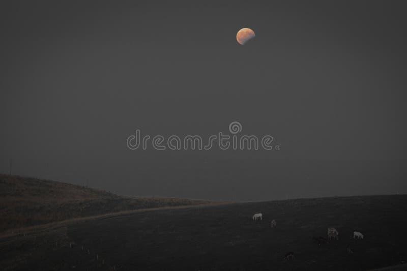 Moon l'effetto di isolamento di colore di eclissi con il pascolo degli asini immagine stock