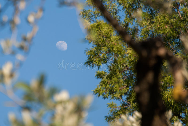 The moon through the leaves stock images