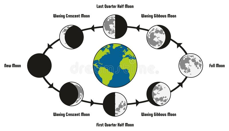Moon Life Cycle Diagram. Including earth position and all phases during circulation full new waning waxing crescent gibbous first last quarter half for vector illustration