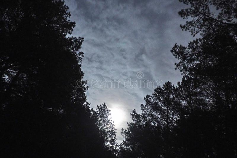 Moon light stars and blue clouds over night forest stock photo