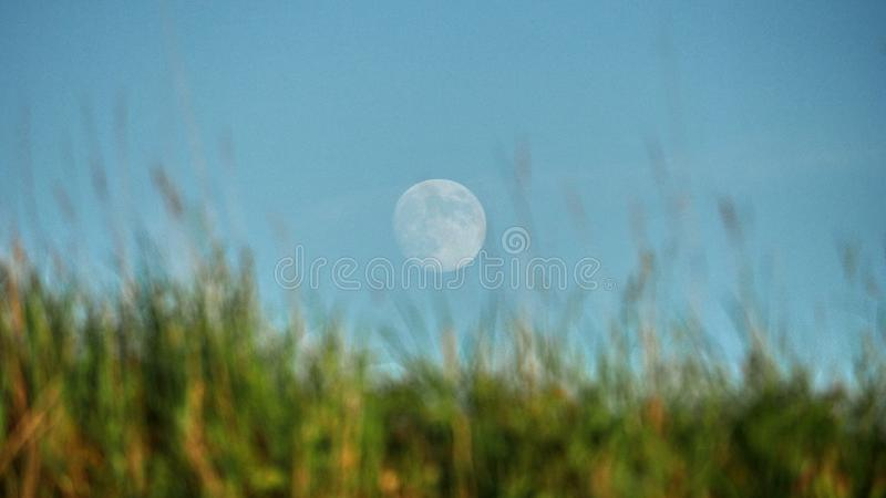 Moon rise and light over green field royalty free stock photo